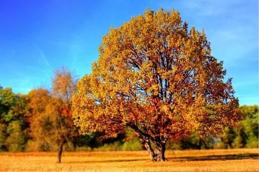 tree-99852__340