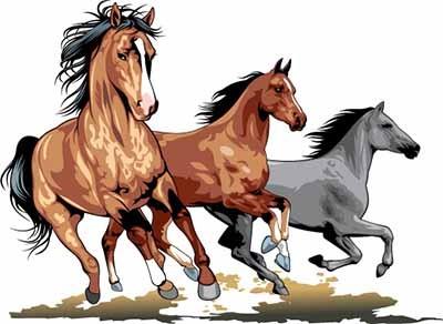 Umaszczenie koni